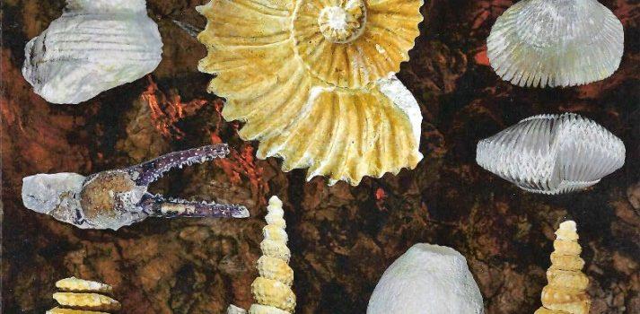 « LE CENOMANIEN DU PAYS FORT ». Richesse des formes et diversité des espèces – Denis PACCARD.